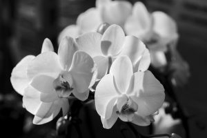 orchid-600300_640
