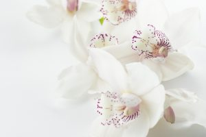 orchids-1209612_1920