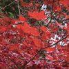 新宿御苑の紅葉の見頃…2016年はいつ?ここだけのスポットの紹介